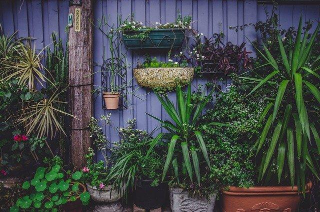 květináče na plotě