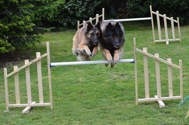 psí skoky